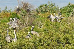vista pelicanos